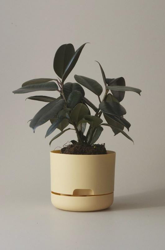 Mr Kitly Self Watering Plant Pot - 170mm - Buff