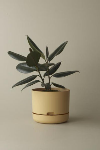 Mr Kitly Self Watering Plant Pot - 250mm - Buff