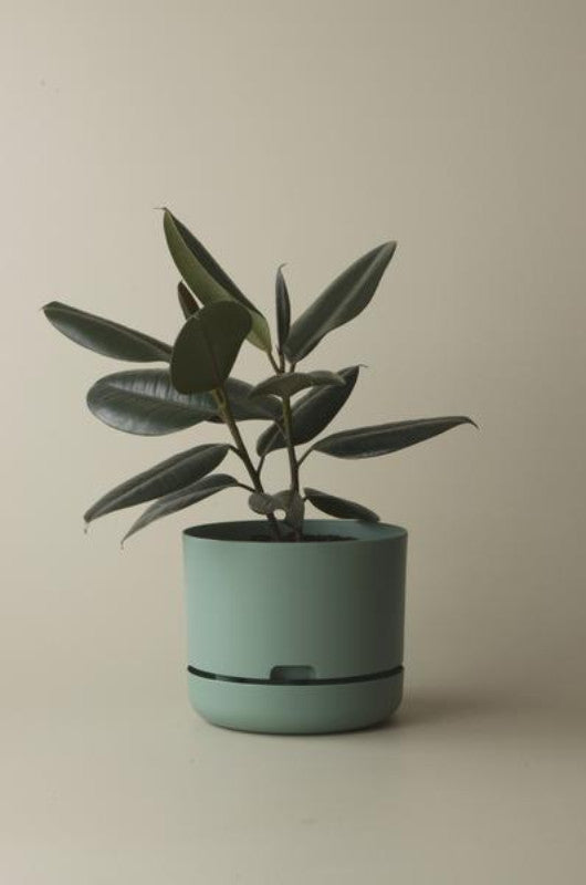 Mr Kitly Self Watering Plant Pot - 250mm - Cabinet Green