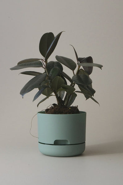 Mr Kitly Self Watering Plant Pot - 170mm - Cabinet Green