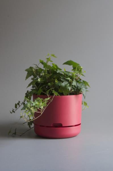 Mr Kitly Self Watering Plant Pot - 250mm - Coral Pink
