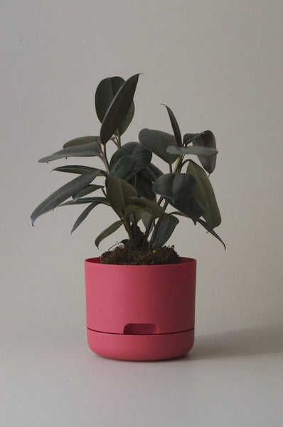 Mr Kitly Self Watering Plant Pot - 170mm - Coral Pink