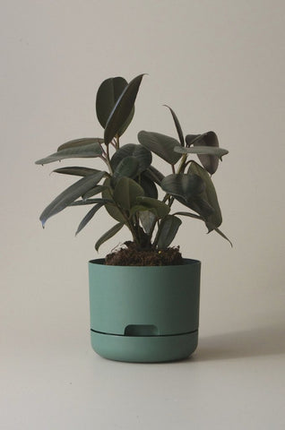 Mr Kitly Self Watering Plant Pot - 170mm - Dark Moss