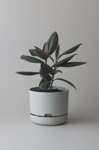 Mr Kitly Self Watering Plant Pot - 250mm - Fog