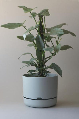 Mr Kitly Self Watering Plant Pot - 375mm - Fog