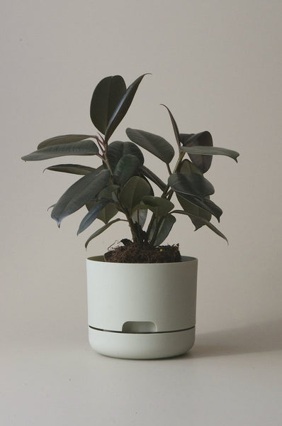 Mr Kitly Self Watering Plant Pot - 170mm - Fog