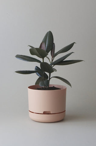 Mr Kitly Self Watering Plant Pot - 250mm - Pale Apricot