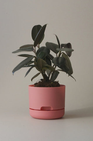 Mr Kitly Self Watering Plant Pot - 170mm - Persimmon