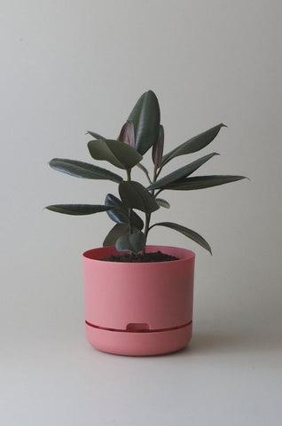 Mr Kitly Self Watering Plant Pot - 250mm - Persimmon