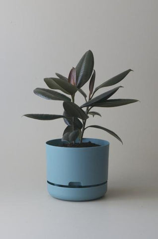Mr Kitly Self Watering Plant Pot - 250mm - Pond Blue