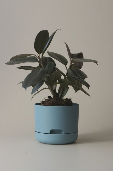 Mr Kitly Self Watering Plant Pot - 170mm - Pond Blue