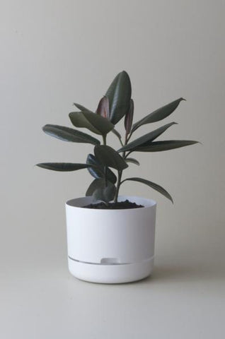 Mr Kitly Self Watering Plant Pot - 250mm - White