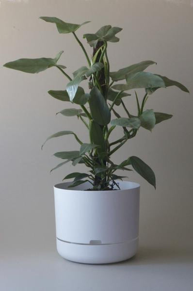 Mr Kitly Self Watering Plant Pot - 375mm - White