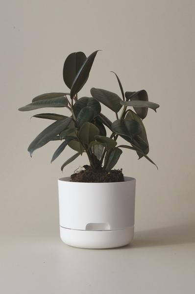 Mr Kitly Self Watering Plant Pot - 170mm - White
