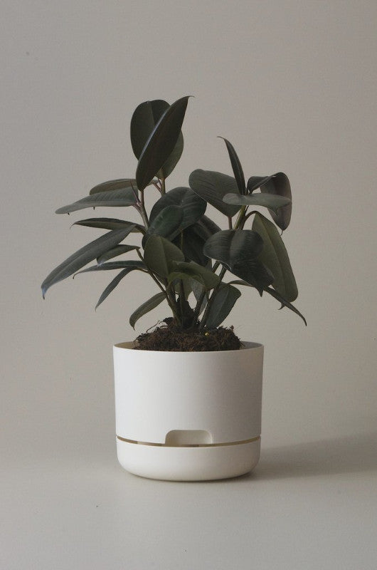 Mr Kitly Self Watering Plant Pot - 170mm - White Linen