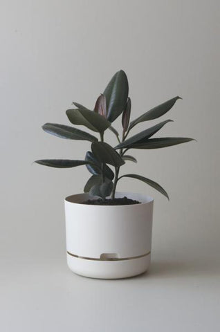 Mr Kitly Self Watering Plant Pot - 250mm - White Linen