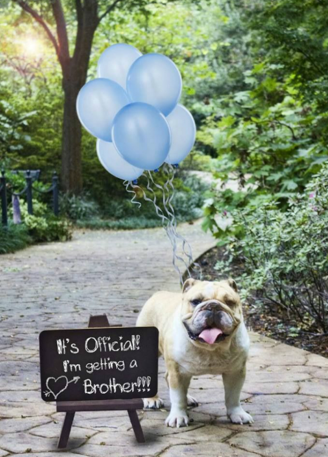 13 Creative Pregnancy Announcements With Your Pets