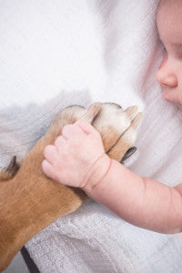 5 Tips to Prepare a Dog for a Baby