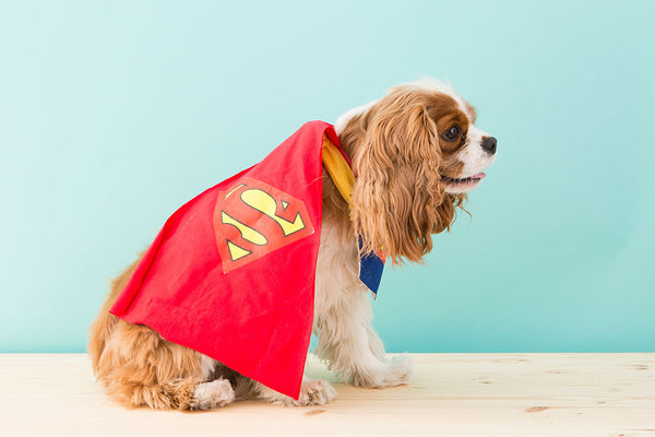 How to DIY a Superman Dog Costume for Halloween