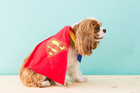 How to diy a superman dog costume for halloween cheerhuzz we also suggest dressing up like a superhero yourself this halloween and twinning with your pet for the ultimate costume win solutioingenieria Choice Image