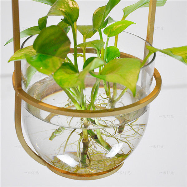 Hydroponic Plant Glass Pendant Light PL492
