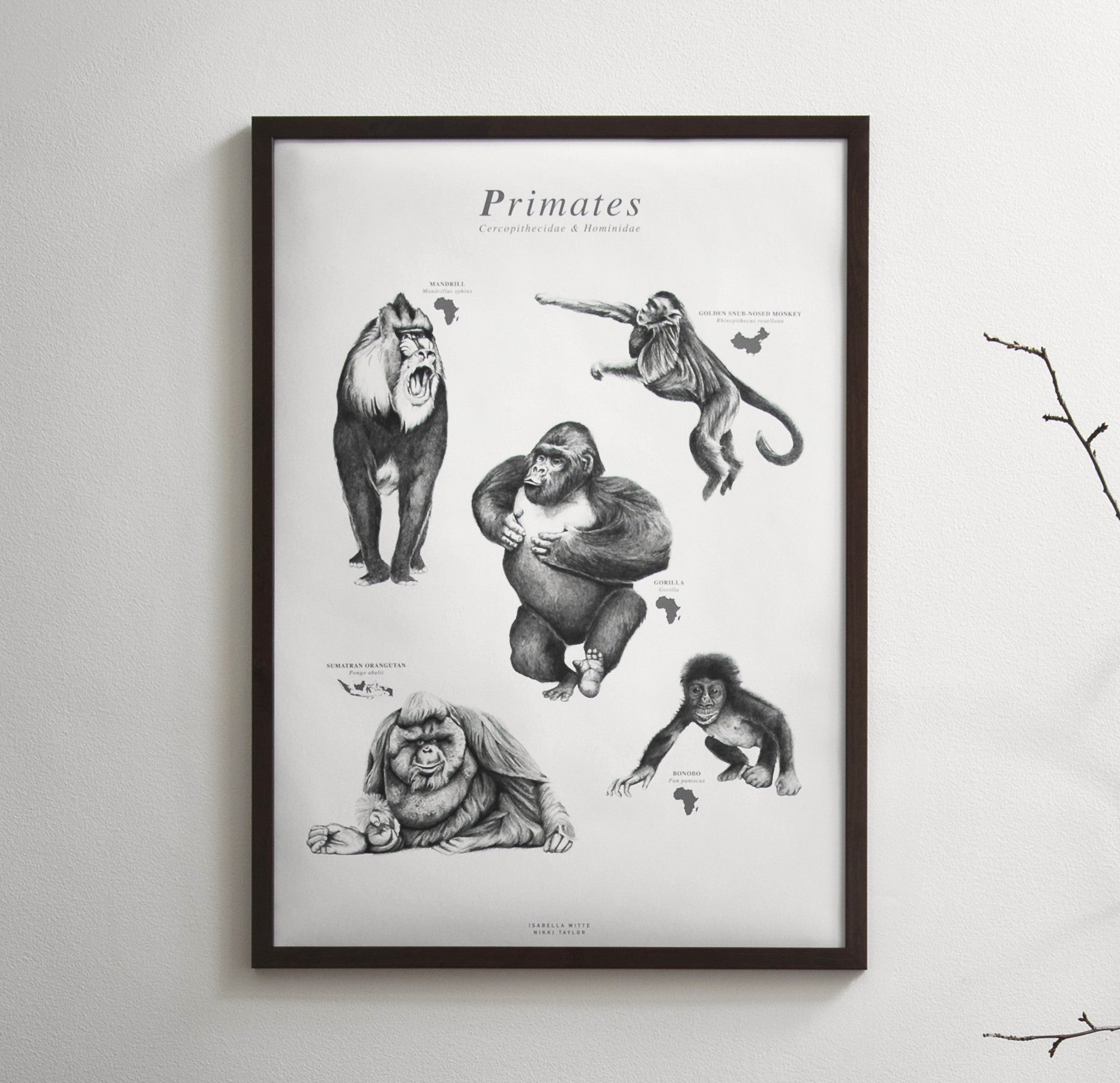 The Primates Poster - Support the fight for the orangutan's survival