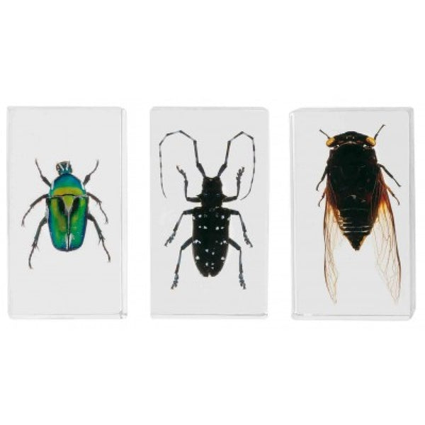 Bug Specimens - medium