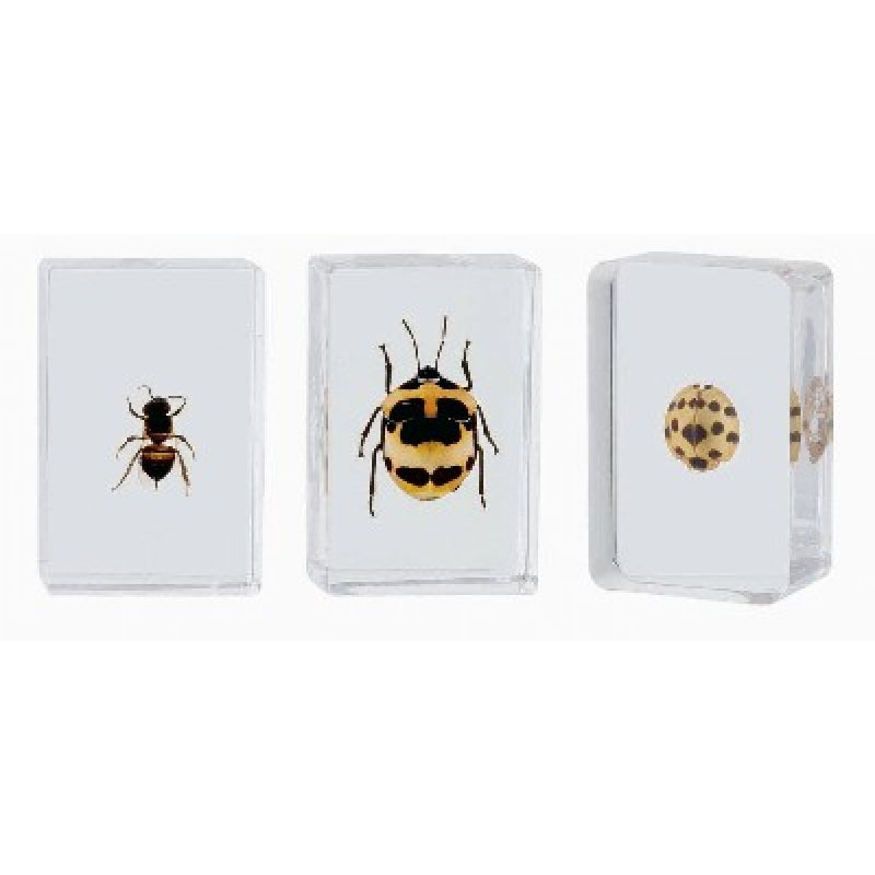 Bug Specimens - small