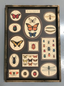 History of Butterflies Paper Sign