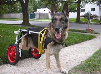 Dog Wheelchair by Best Friend Mobility XL