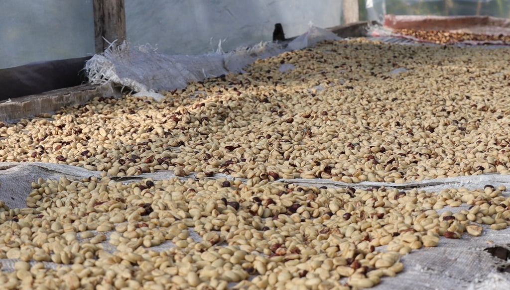 washed drying coffee