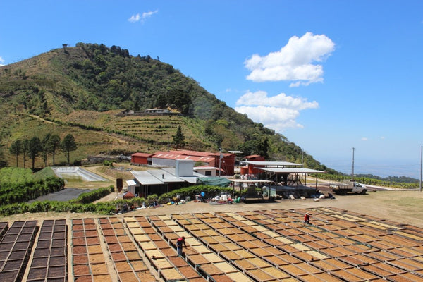 coffee processing facilities