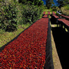 Panama Finca Los Lajones Geisha Honey Lot 1