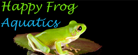 Happy Frog Aquatics