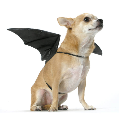 Bat Wings, Size M/L (for pets 20 – 50 lbs)
