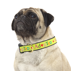 dog collars, harnesses + leashes