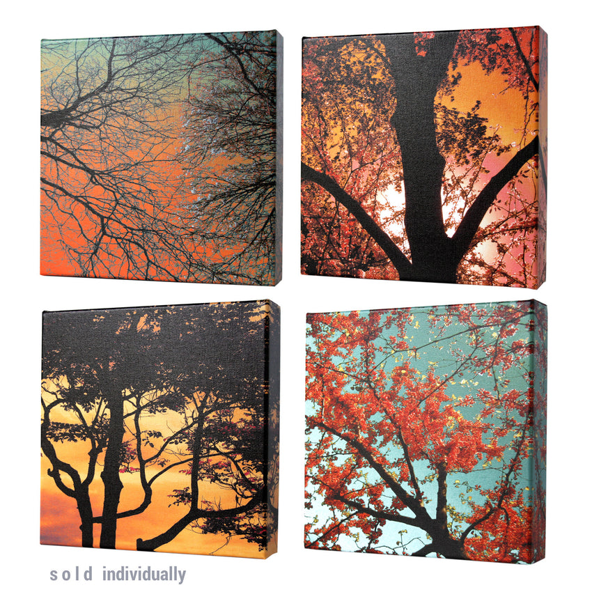 Sunset Forest I Print - Matthew Lew Art Print