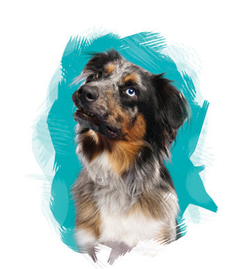 Bigger Dog - Birthday Package  14% Off Auto renew