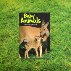 Baby Animals by Barbara Maxwell, Sunshine Non-fiction