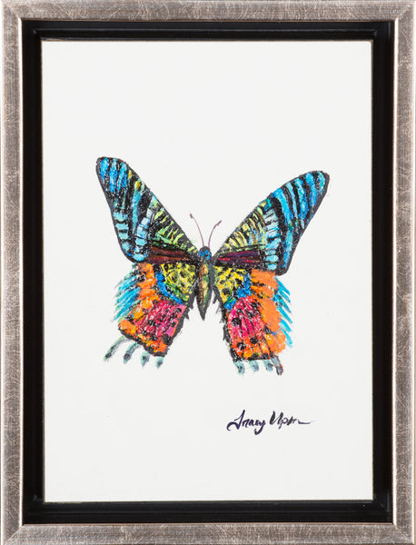 "Madagascar Sunrise Butterfly              6 ½"" x 8 ¾"" x 2"" deep"