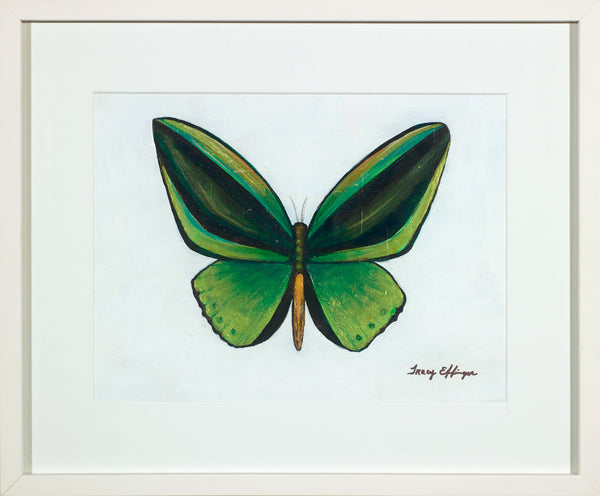 Green Goliath Butterfly