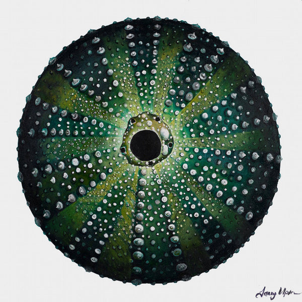 Green Sea Urchin      36