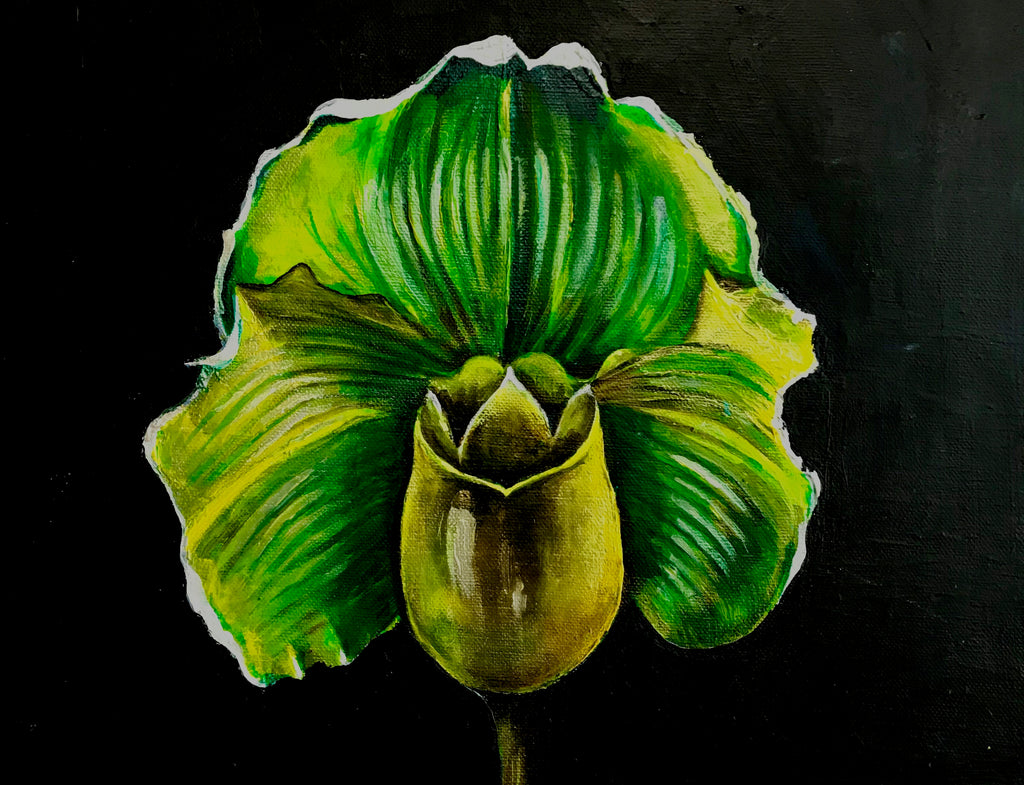 Yellow Lady Slipper, 11