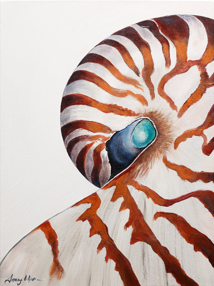 Nautilus Eye      16