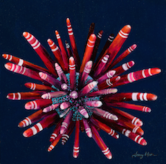 Red Pencil Sea Urchin