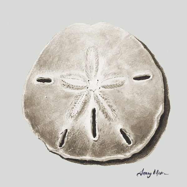 Treasure Cay Sand Dollar II