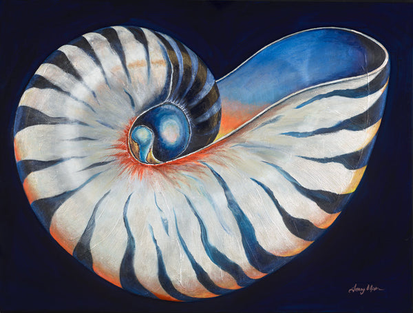 Blue Tiger Nautilus        36