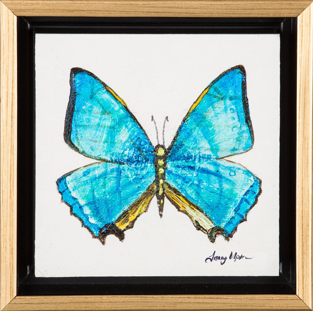 "Turquoise Iridescent Morpho Butterfly      6 ½"" x 6 ½"" x 2"""