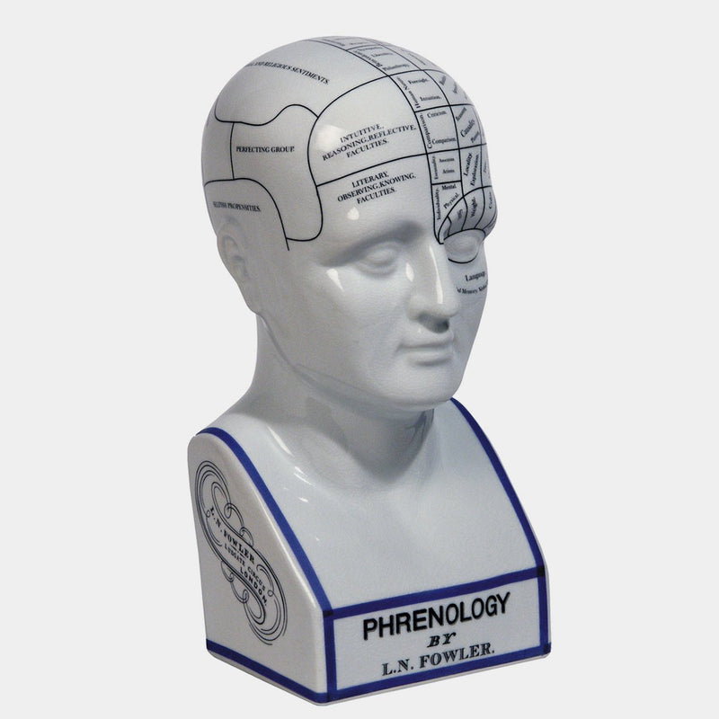 Phrenology Head - Designer Studio