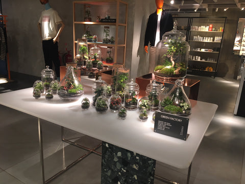Les terrariums Green Factory chez Harvey Nichols